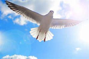 2021年5月23日「喜びと悲しみの旅立ち」佐藤成美牧師